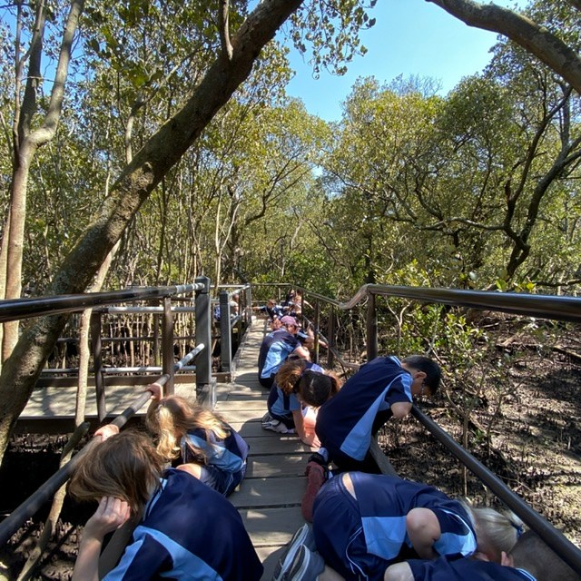 students viewing the mangrove floor from a boardwalk