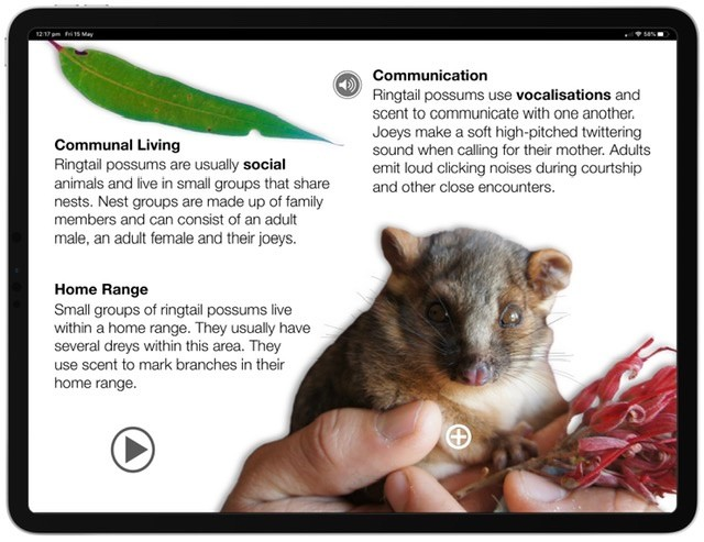 Screenshot of the Ringtail Possum Multi-Touch Book.