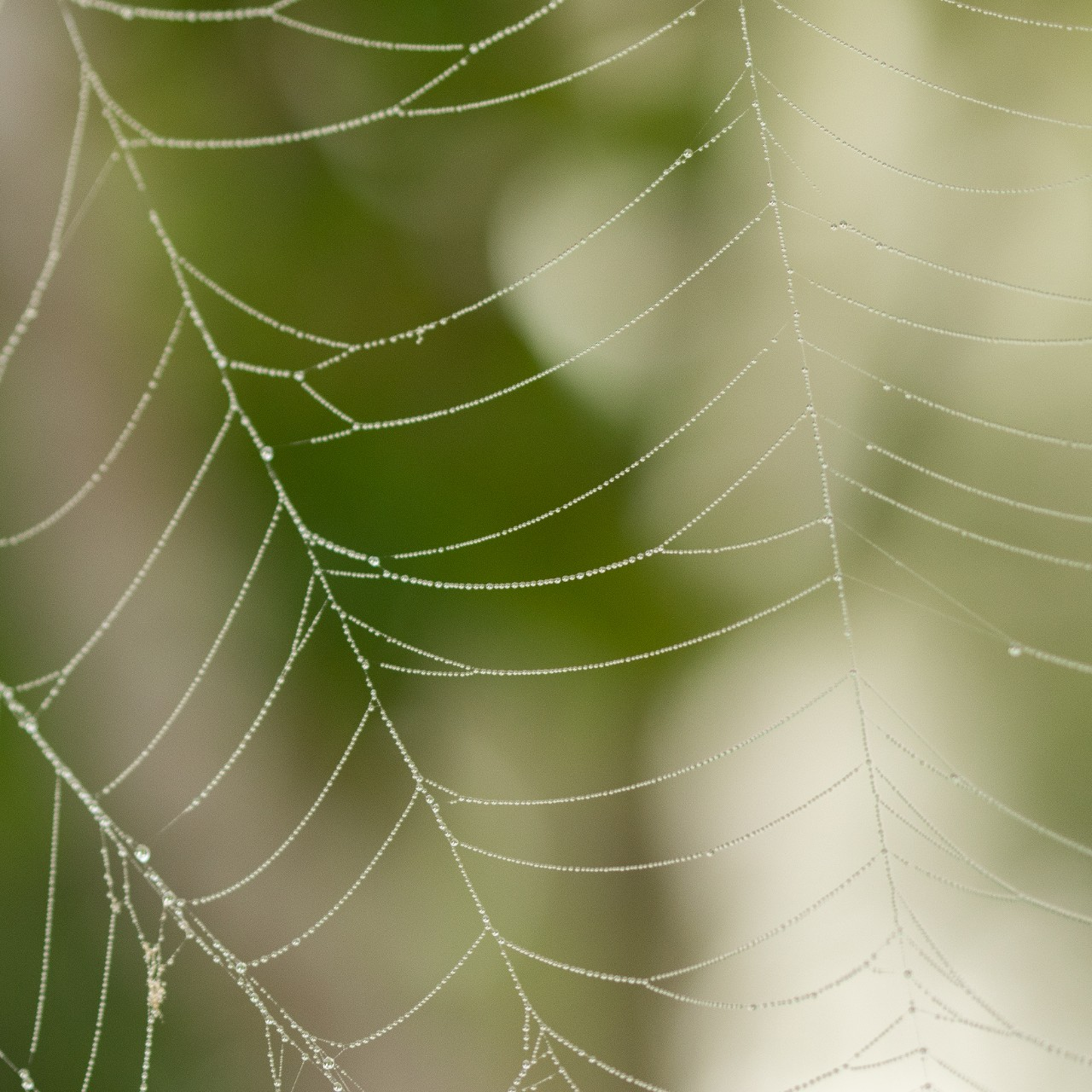 a spider web with water droplets