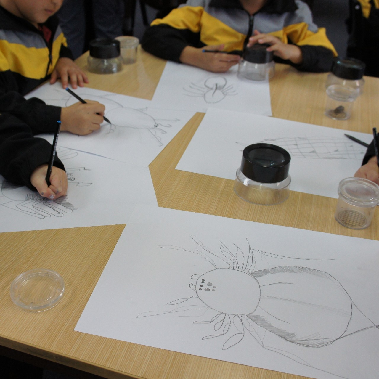 students drawing their invertebrates on paper