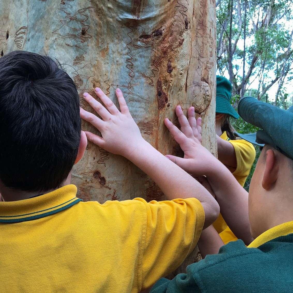 students looking at markings on a tree