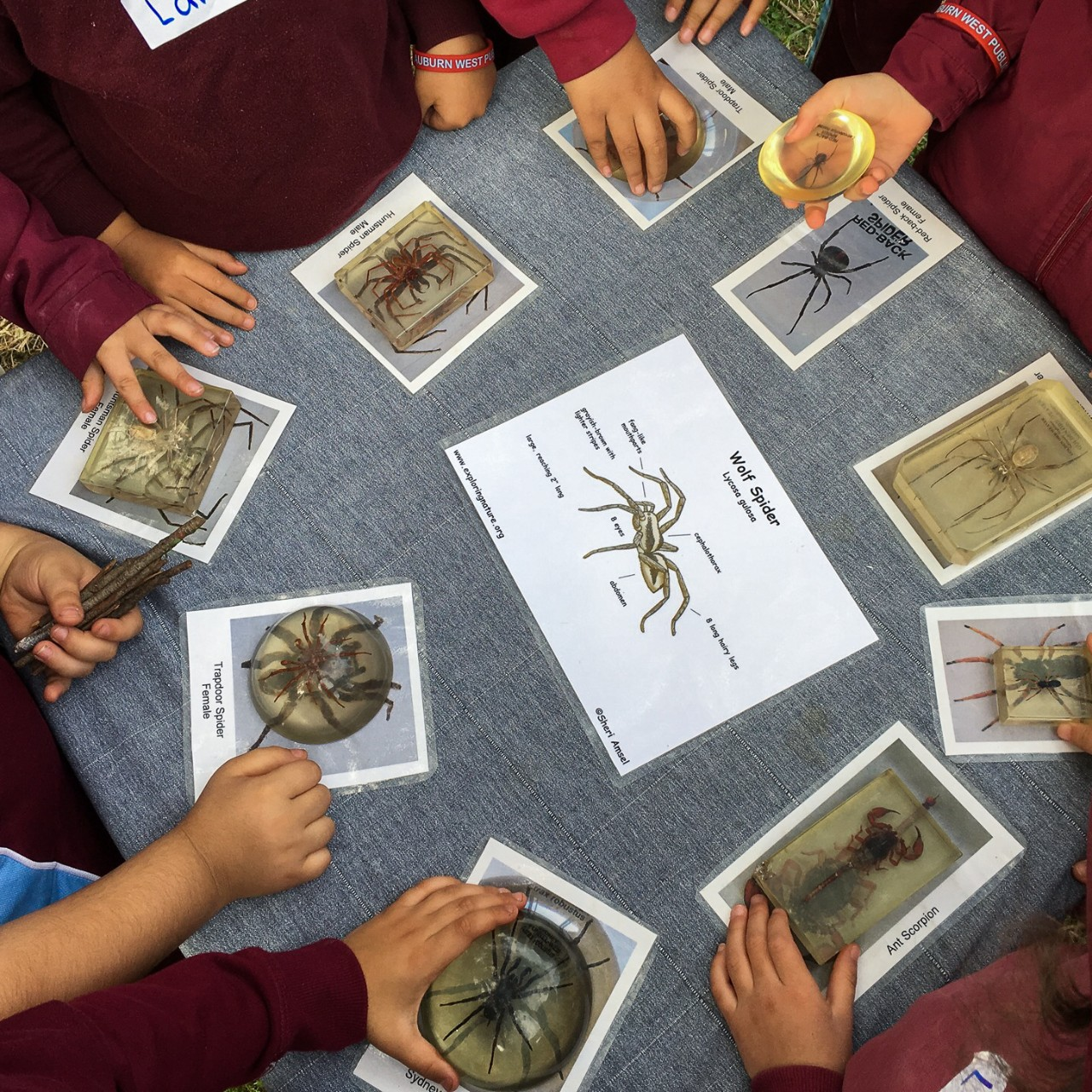 students looking at preserved specimens of invertebrates
