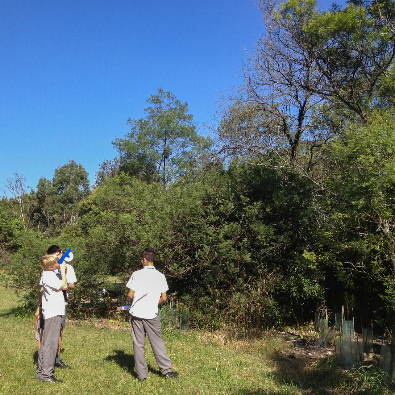 boys using a clinometer to measure the height of a tree
