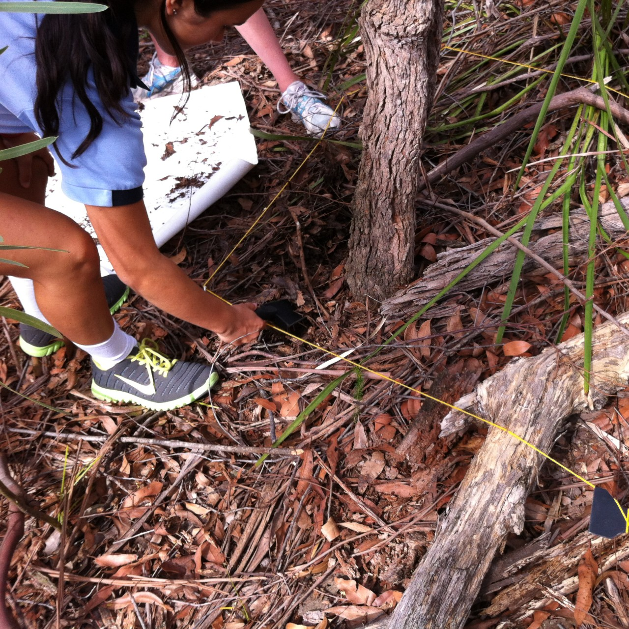 students finding invertebrates within a quadrat in the bush