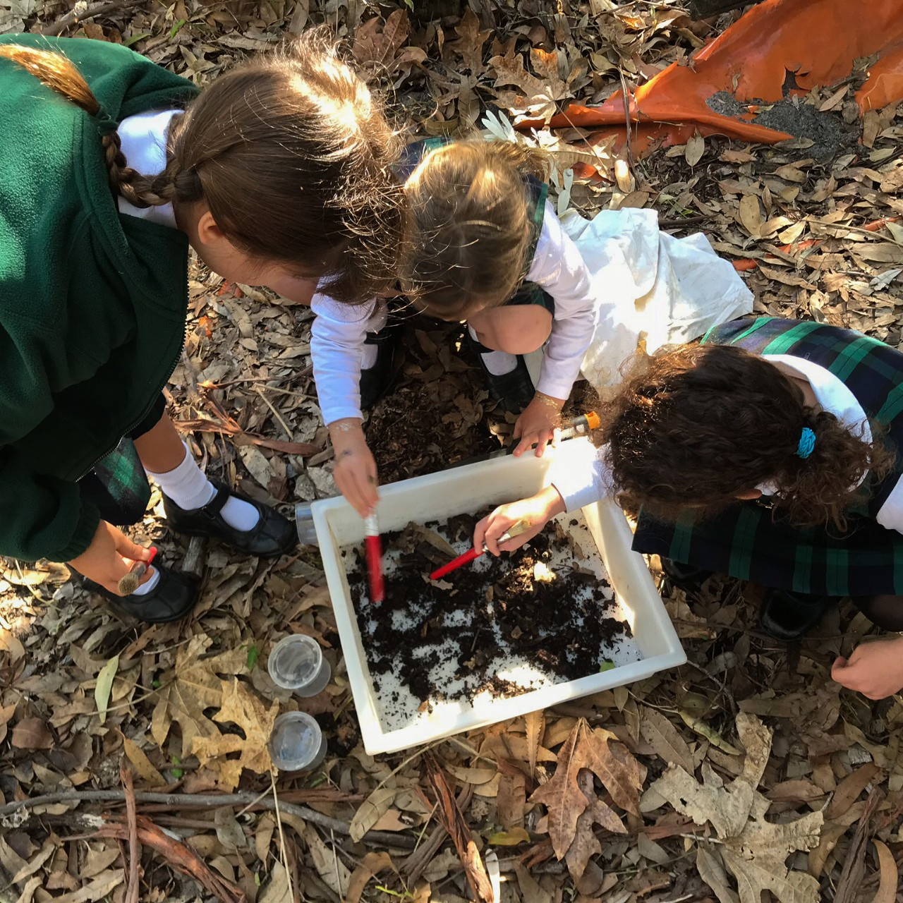 students searching for bugs in a tote tray