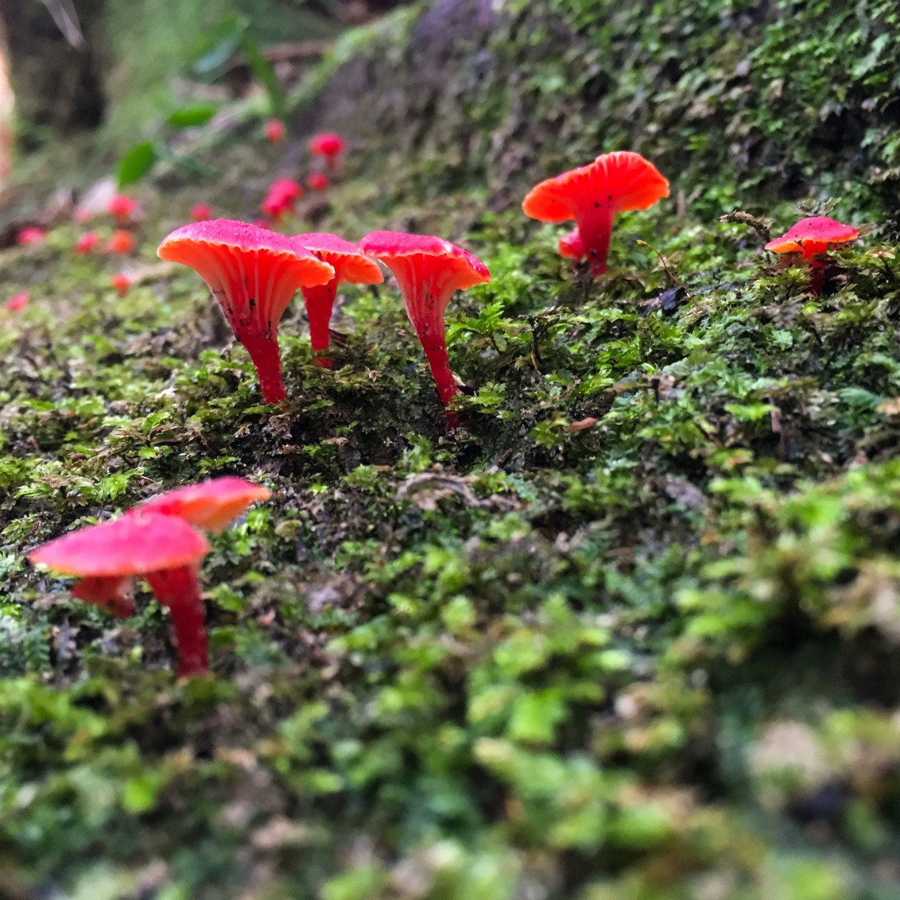 red mushrooms growing in moss