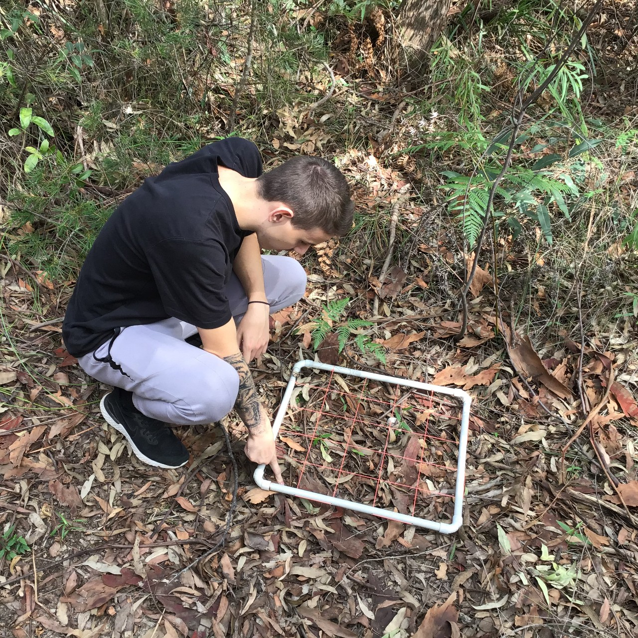 student looking at plants within a quadrat