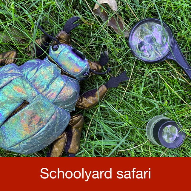Schoolyard safari