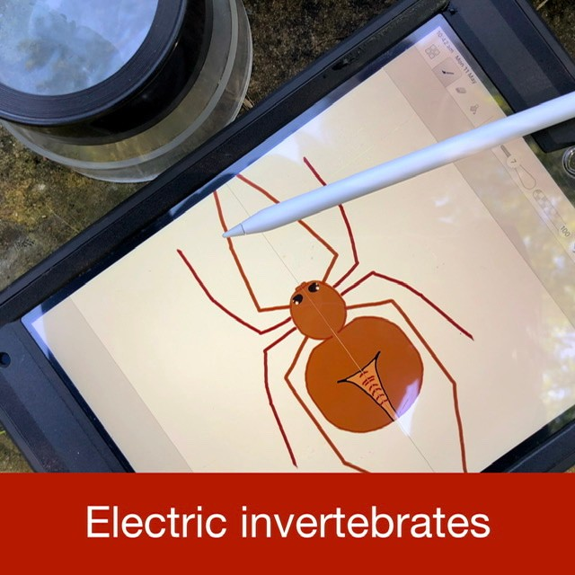 Electric invertebrates link