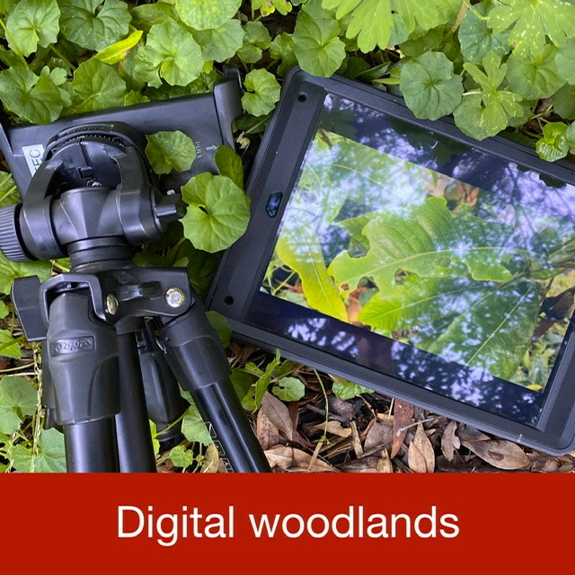 Digital woodlands